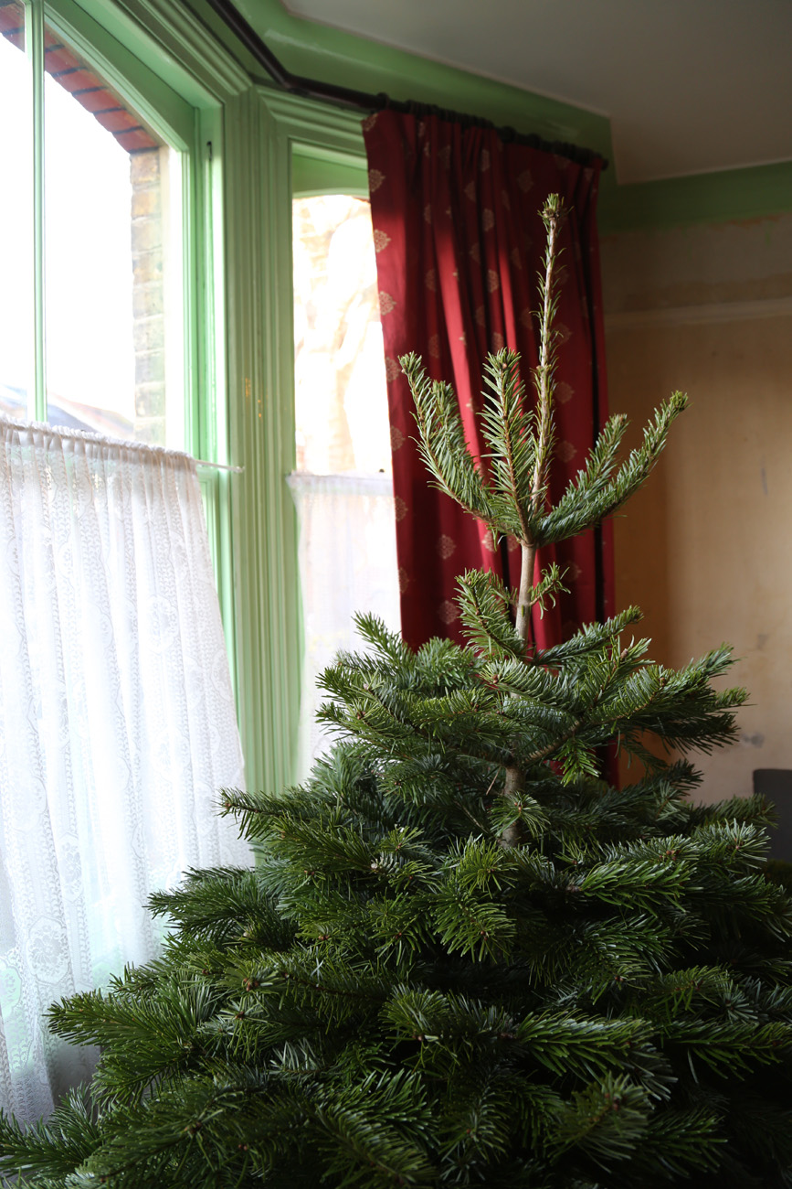 Barrington Our Christmas Tree For 2014 Door Eleven