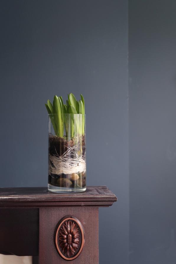 150219-Hyacinth