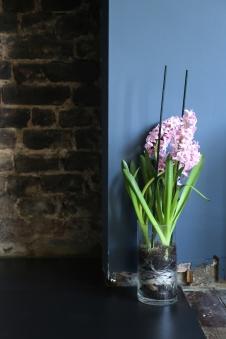 150302-Hyacinth