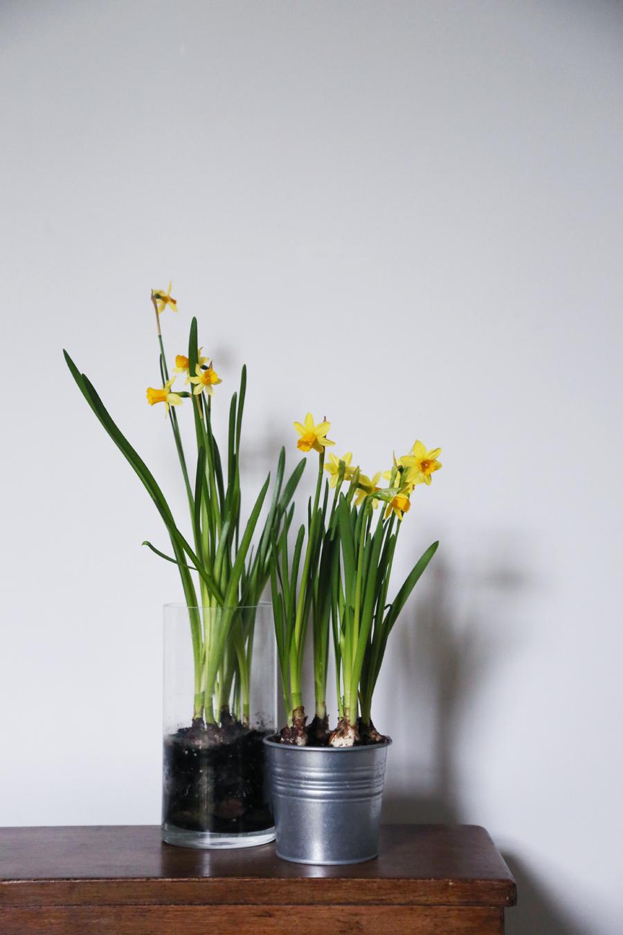 170221-Daffodils.jpg