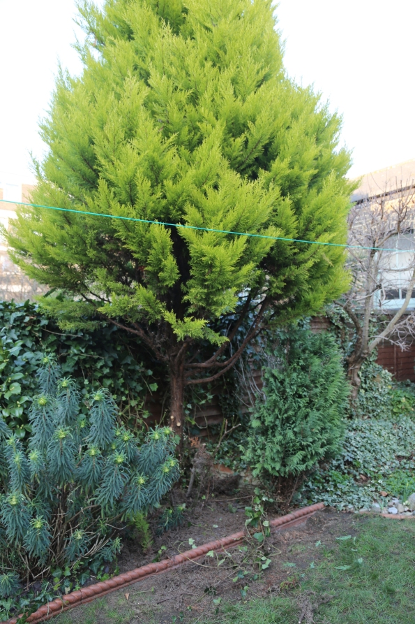 170304-cedartree2