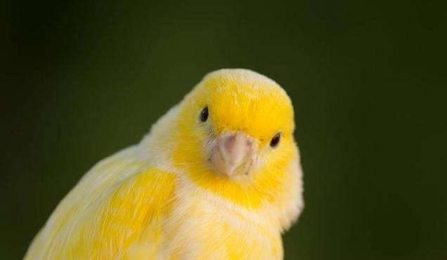 180510-Canary